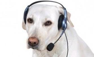 В германии замкнена в будинку собака викликала поліцію