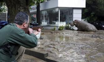 В грузії спецназівці полюють на тварин із зоопарку
