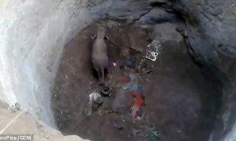 В індії врятували слоненяти, який провалився в 9-метровий колодязь
