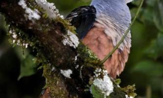 В індонезії виявили ряд невідомих науці тварин