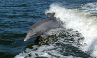 У ірландії дельфін напав на дівчину під час купання