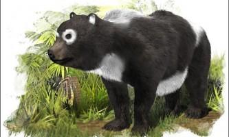 В іспанії виявлений викопний предок панди