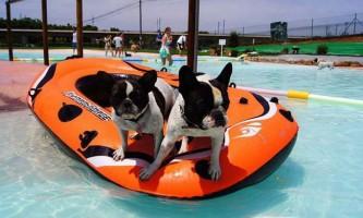 В іспанії відкрився курорт для собак