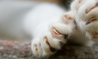 В ізраїлі заборонили стригти кігті кішкам під страхом в`язниці