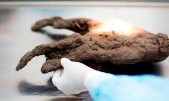В якутії вивчають мозок цуценя, яке мешкало на землі 12400 років тому