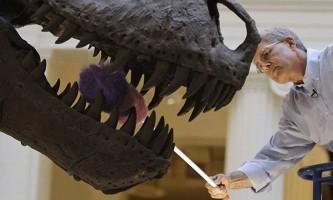 В японії були знайдені останки гігантського тиранозавра