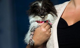 У каліфорнії відбувся конкурс найпотворніший пес у світі