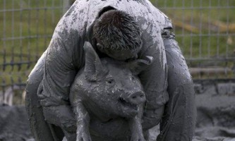 В канаді пройшов «свинячий фестиваль»