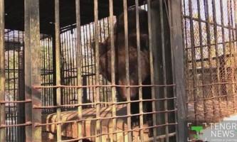 У казахському зоопарку перелякана феєрверками ведмедиця з`їла власних дитинчат
