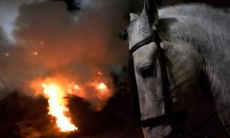 У кіровоградській області коні згоріли разом зі стайнею