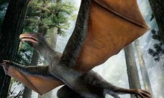 В китаї знайдений динозавр, схожий на кажана
