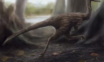 В китаї знайдений динозавр-трясогузка