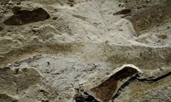 В китаї знайшли скам`янілості найдавнішого великого багатоклітинного організму