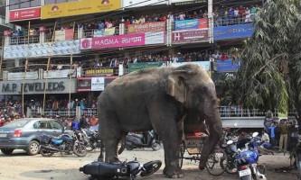 В китаї слон зненацька накинувся на людей