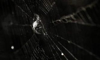 В китаї у жінки в вусі оселився павук і сплів там павутину