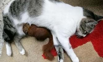 У колумбії кішка усиновила бельчонка