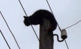 У комі енергетики врятували мокру кішку, яка три дні сиділа під струмом