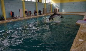 У криму бойові дельфіни вмс україни влаштували втечу