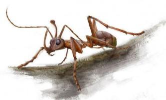 """У шматку стародавнього бурштину виявлено незвичайний """"мураха-рогоносець"""" з величезними щелепами"""