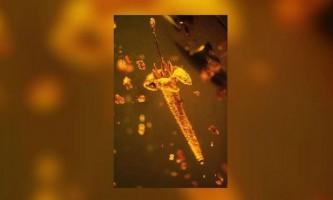 У шматку бурштину знайшли новий вид доісторичних рослин