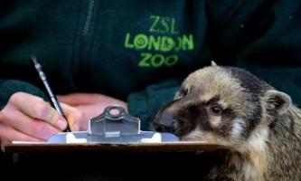 У лондонському зоопарку пройшла перепис тварин