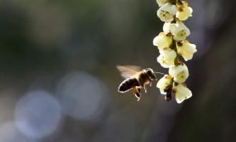 У лос-анджелесі рій розлючених бджіл атакував учасників дтп