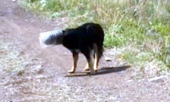 У магнітогорську врятували застряглу в банку собаку