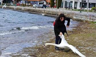 У македонії туристка замучила лебедя заради селфі