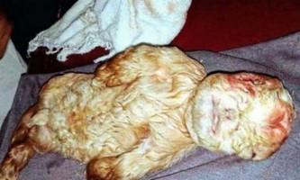 У малайзії народився козеня з людським обличчям