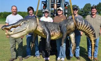 У міссісіпі зловили алігатора з рекордною вагою