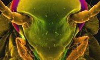У мозку тарганів знайдені антибіотики