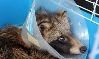 У нижньому новгороді врятували єнотовидного собаку
