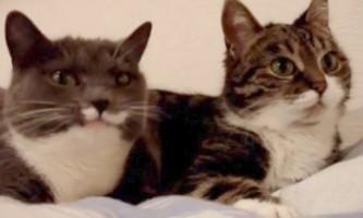 У нью-йорку пройде виставка, присвячена відеохітам з котиками