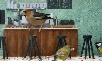 У норвегії йде телешоу, дія якого відбувається в кафе для диких птахів