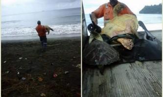 У новій зеландії чоловік купив у супермаркеті черепах і випустив їх на волю