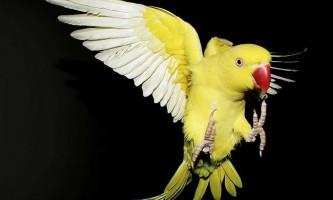 У новій зеландії папуга став вихователем для цуценят пітбуля