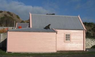У новій зеландії врятували морського котика, який від страху заліз на дах