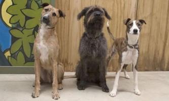 У новій зеландії три собаки навчилися керувати автомобілем
