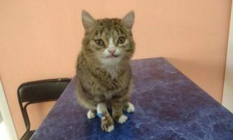 У новосибірську був врятований кіт з дивною мордою