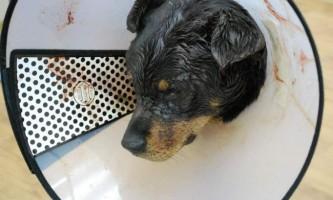У новосибірську чоловік до смерті побив бродячого собаку