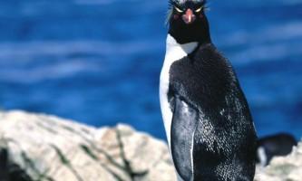 У новосибірському зоопарку відкриється пінгвінарій