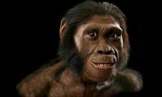 В оае виявили останки найдавнішої мавпи