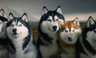 В оренбурзі собак заарештували за борги господаря