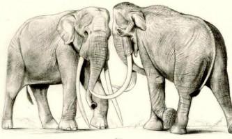 У пермі знайшли останки предка шерстистого мамонта