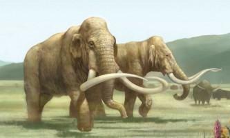 У пермської області виявлено масове поховання древніх тварин