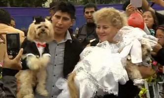 У перу одружили чотири десятка собак