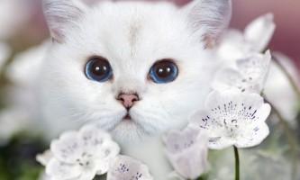 Імена для білих кошенят російською та англійською мовами