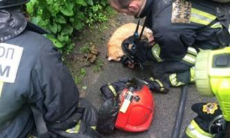 У петербурзі пожежники врятували кота