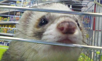 У пітерському зоомагазині тварин затопило окропом