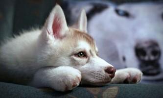 В росії 15 серпня відзначать всесвітній день бездомних тварин